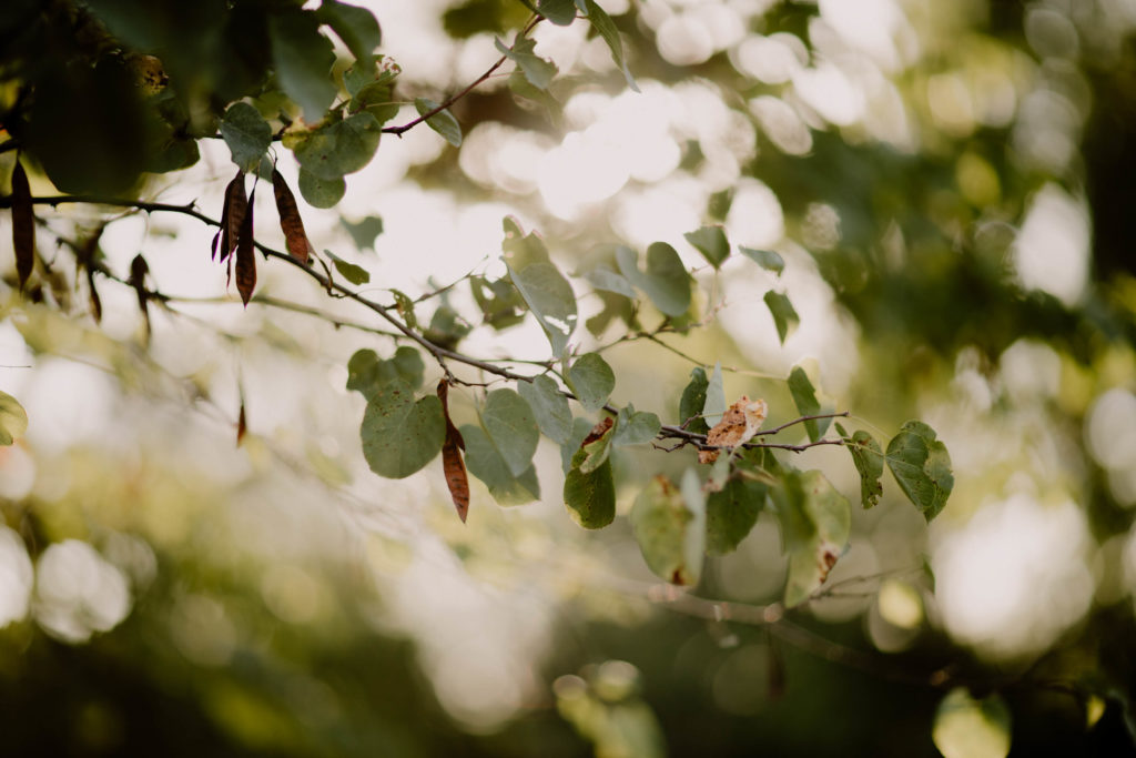 image d'une branche d'arbre à thor